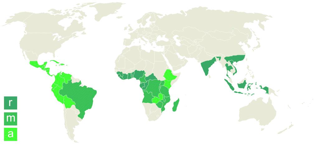 Arabica vs Robusta Coffee Beans Map