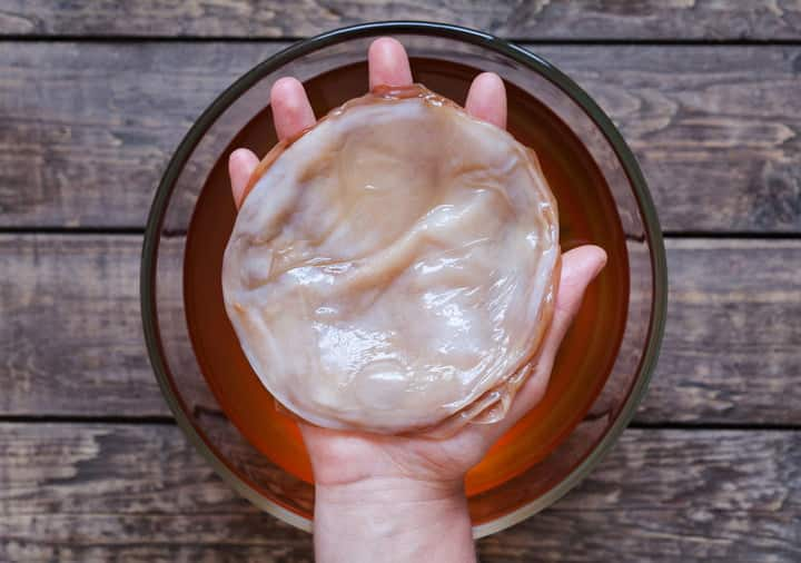 Don't be scared - this is what every SCOBY looks like.